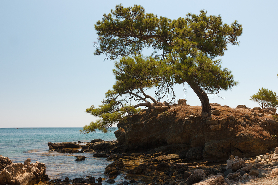 bigstock-Tree-On-Rocky-Seashore-47740354